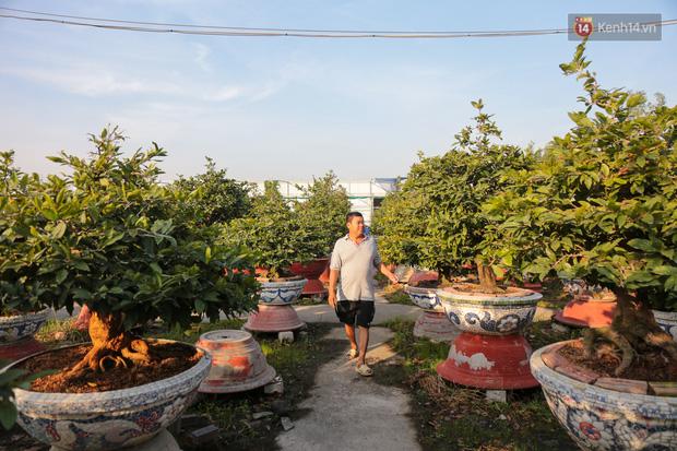 Cả nghìn cây mai Tết nở hoa sớm hơn cả tháng, nhà vườn ở Sài Gòn thiệt hại 15 tỷ đồng - Ảnh 2.
