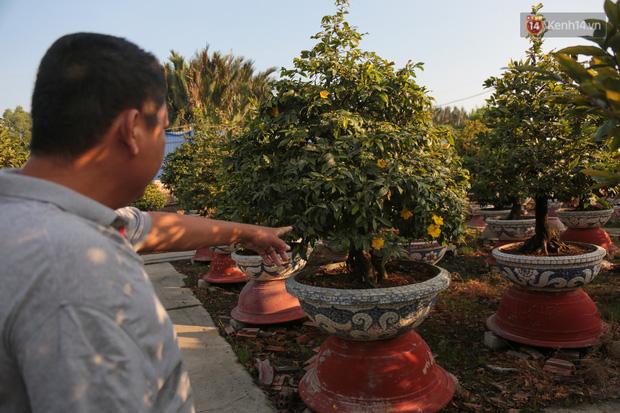 Cả nghìn cây mai Tết nở hoa sớm hơn cả tháng, nhà vườn ở Sài Gòn thiệt hại 15 tỷ đồng - Ảnh 11.