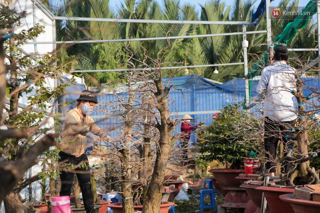Cả nghìn cây mai Tết nở hoa sớm hơn cả tháng, nhà vườn ở Sài Gòn thiệt hại 15 tỷ đồng - Ảnh 12.