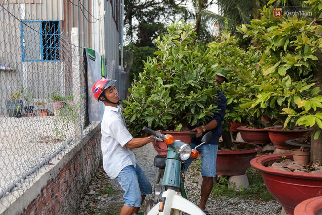 Cả nghìn cây mai Tết nở hoa sớm hơn cả tháng, nhà vườn ở Sài Gòn thiệt hại 15 tỷ đồng - Ảnh 19.