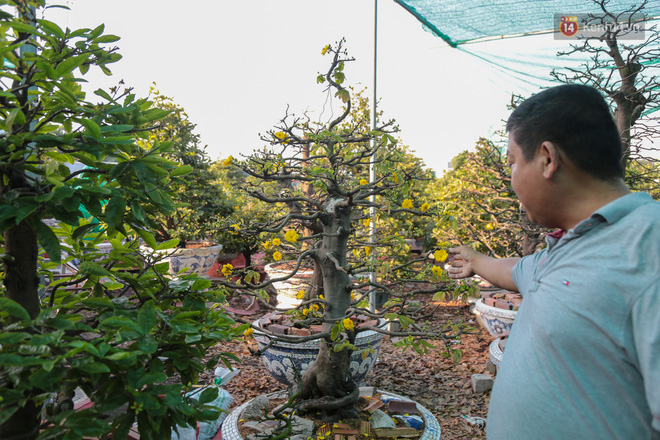 Cả nghìn cây mai Tết nở hoa sớm hơn cả tháng, nhà vườn ở Sài Gòn thiệt hại 15 tỷ đồng - Ảnh 7.