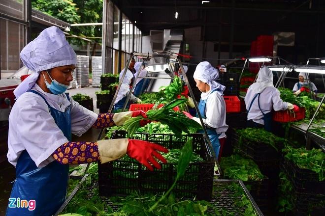 Xuất khẩu nông sản hướng đến 62 tỷ USD - 1