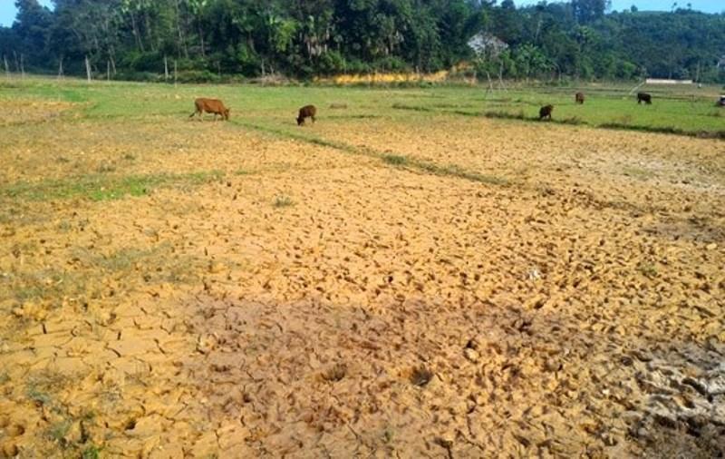 Đã có năm, Công ty Hùng Vương phải bồi thường tiền tỷ do đất đá từ mỏ quặng vùi lấp ruộng lúa của nhân dân.
