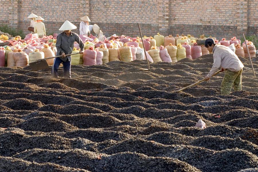 Cà phê là mặt hàng nông sản tiềm ẩn nhiều bất ổn về giá cả.