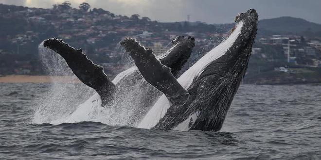 Số lượng cá voi bitcoin vừa sụt giảm xuống mức thấp đáng kể - Ảnh 1.