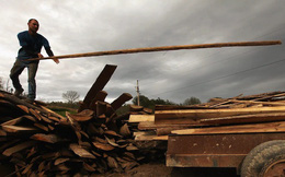Giá gỗ giảm phiên thứ 8 liên tiếp
