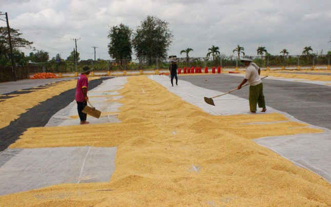 Xuất khẩu gạo Việt Nam giảm cả về lượng lẫn giá trị  - Ảnh 1.