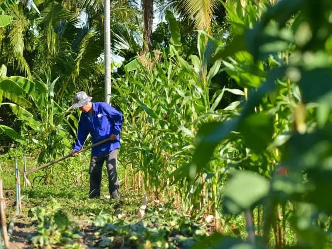 Đại gia lao tâm khổ tứ vì chôn hàng chục tỉ đồng vào farmstay, mua đất 6 triệu đồng/m2 lúc sốt, rao bán mãi không ai mua, phải bán cho chủ cũ 3 triệu đồng/m2 - Ảnh 1.